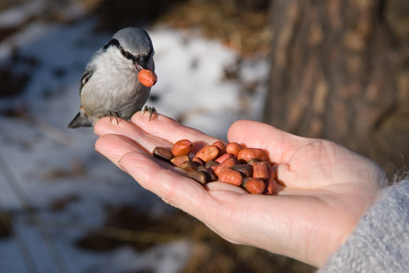 проявление доброты