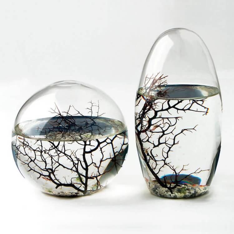 экосистема аква