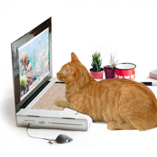 ноутбук для кота